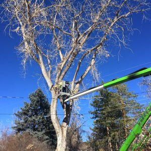 Tree Trimming by Bailey Tree LLC