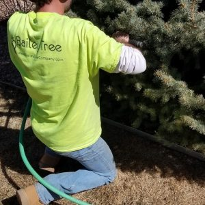 Tree Fertilizer and Deep Root Feeding by Bailey Tree LLC
