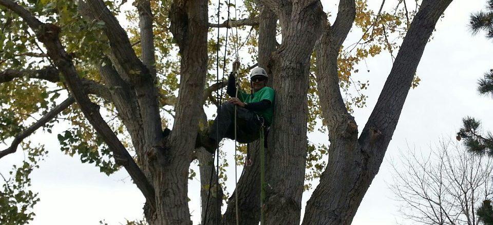Denver Tree Removals