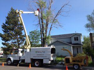 Denver Tree Trimming
